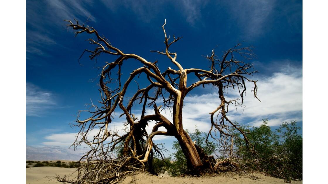 Nature morte au cœur de la Vallée de la Mort