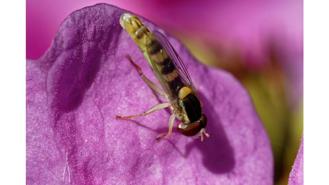 Fleurs et Insectes