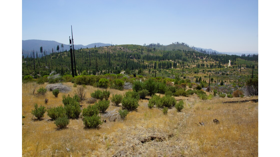 Troncs calcinés - Yosemite