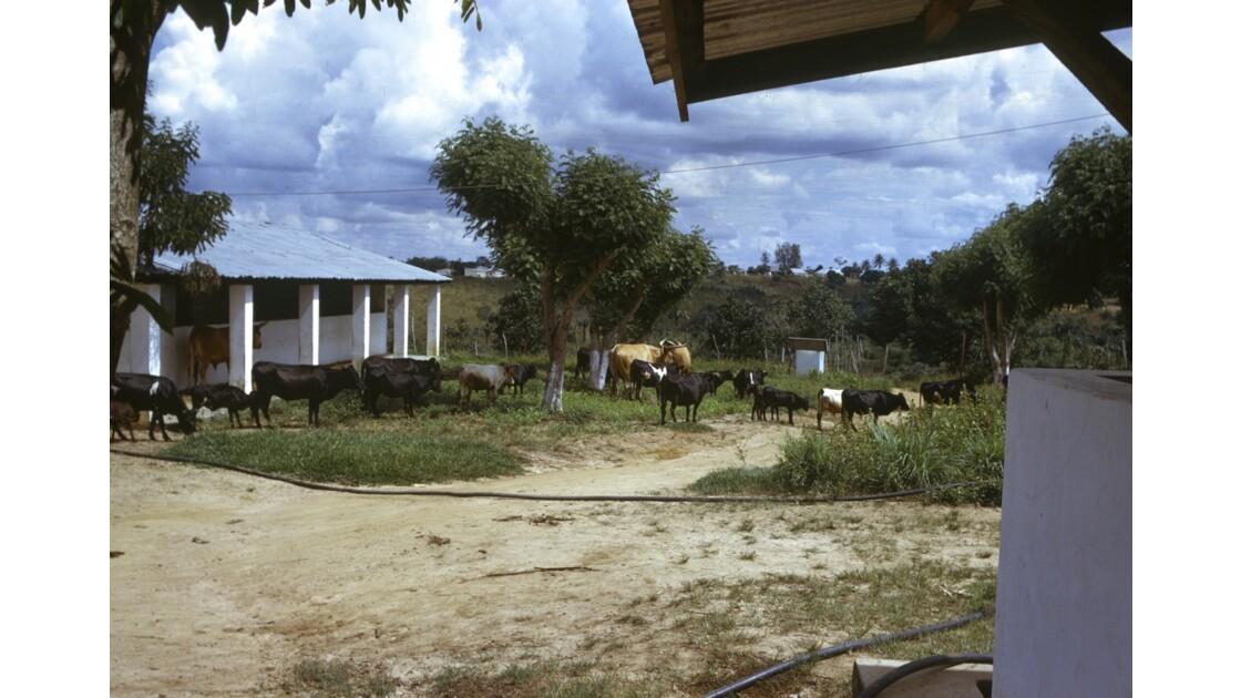 Congo 70 Ranch de la Dihessé