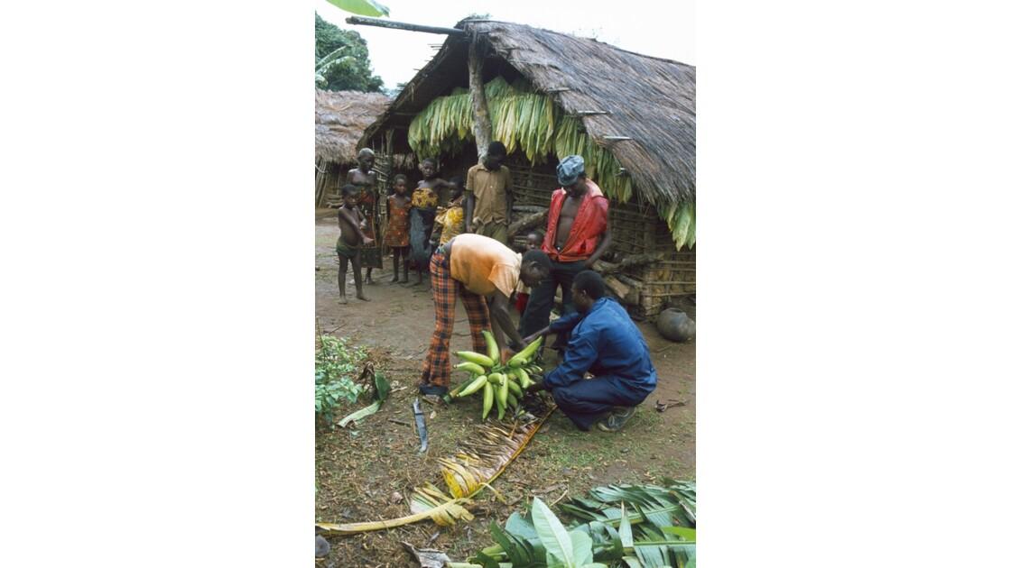 Congo 70  Plateaux Téké régime de banane plantain