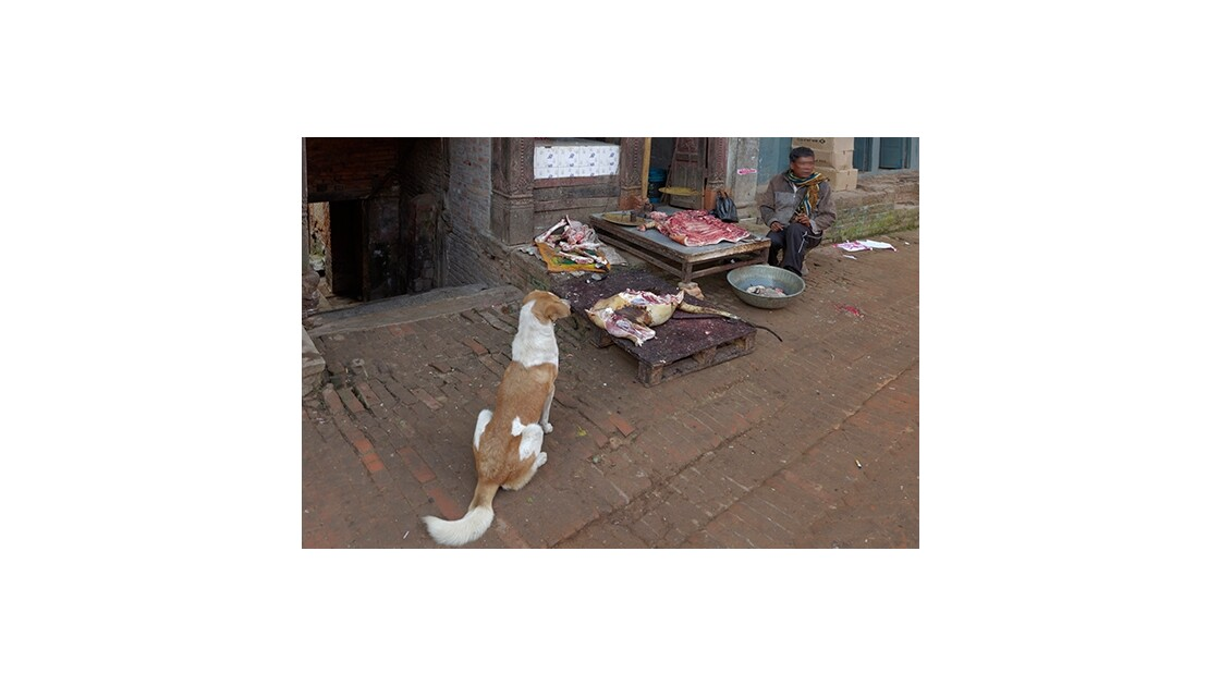 Boucherie dans une ruelle à Katmandou