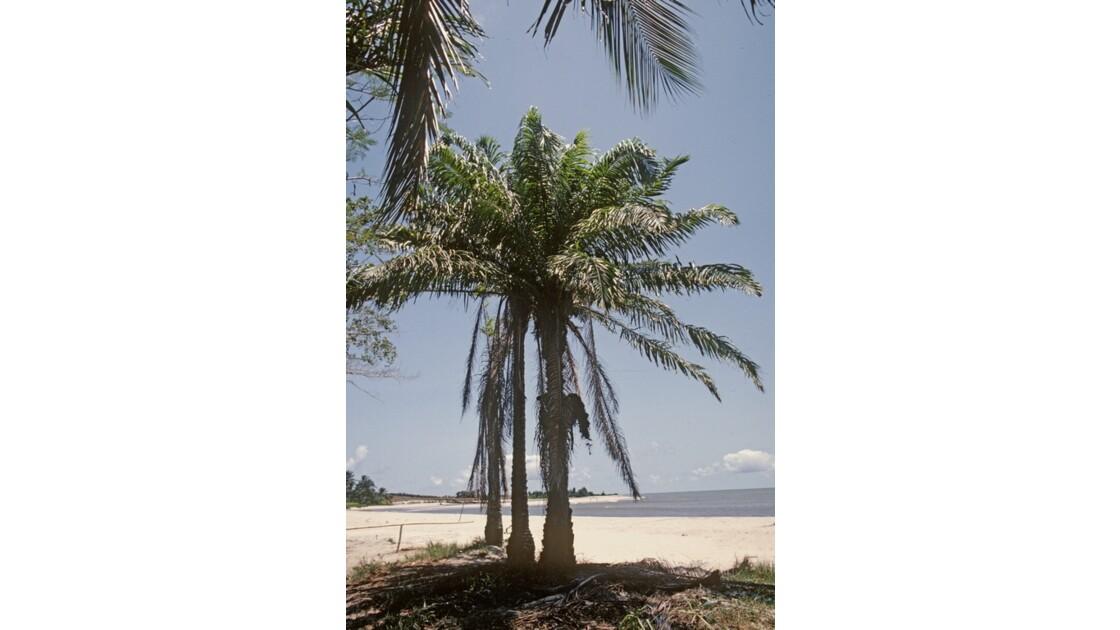 Congo 70 Baie de Loango 4