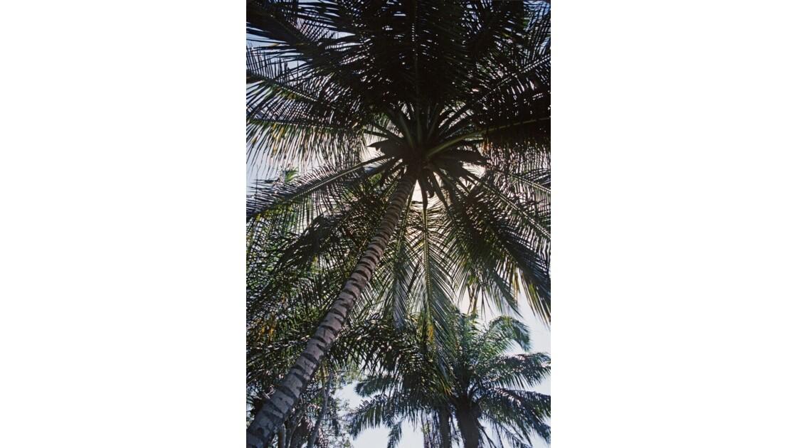 Congo 70 Baie de Loango 5