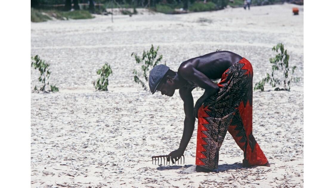 Congo 70 Baie de Loango séchage des sardines 2