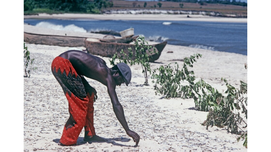 Congo 70 Baie de Loango séchage des sardines 1