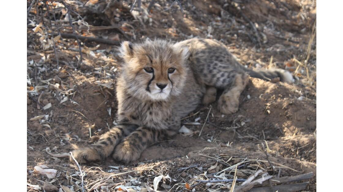 La Namibie, pays où la vie sauvage appelle à l'aide