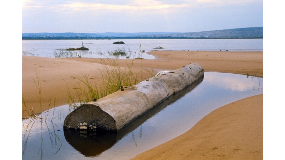 Congo 70 Pool Bille de bois échouée 1
