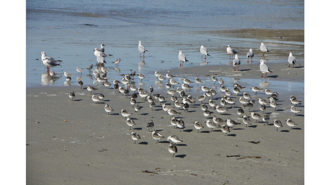 Sublimes oiseaux