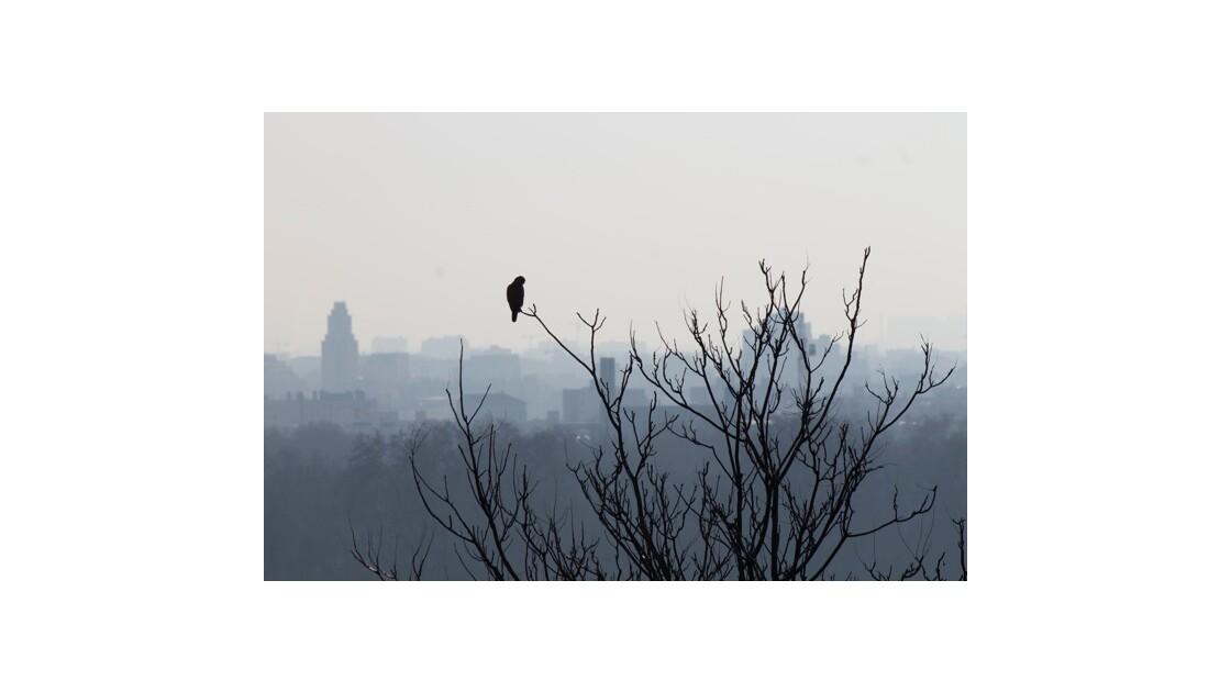 Oiseau sur la ville