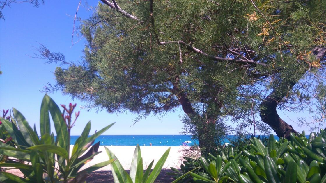 Les arbres d 'argelés sur mer
