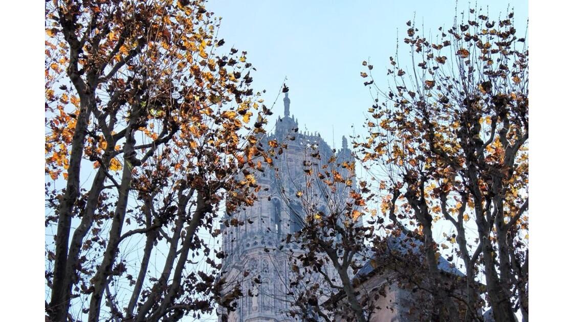 La Cathédrale Notre-Dame à travers les branchages.