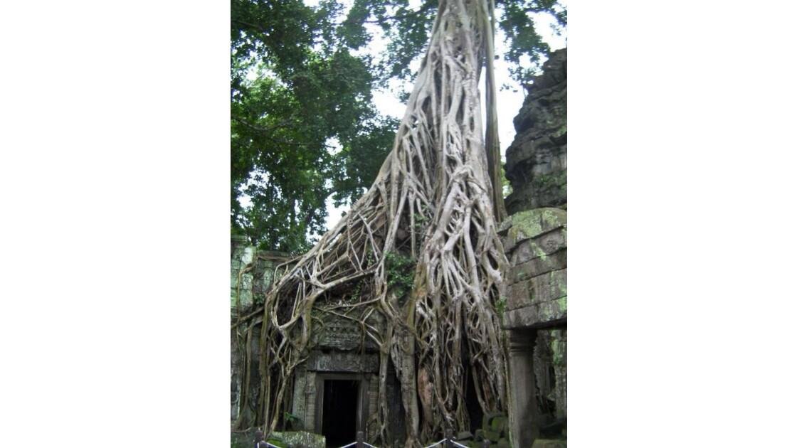 Temple angkor