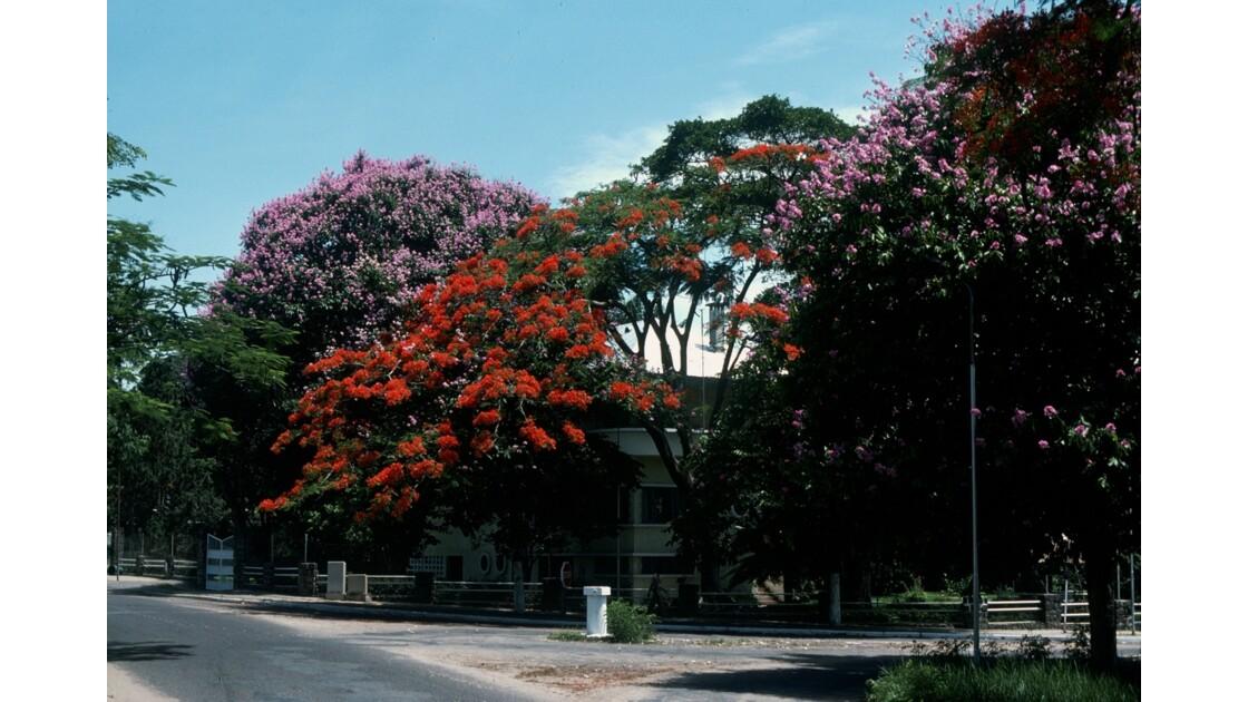 Congo 70 Les flamboyants de Brazzaville 6