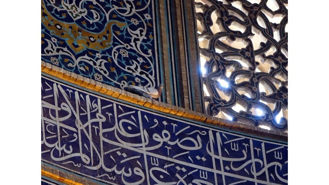 Iran Ispahan mosquée du Sheikh Lotfollah le pigeon de la salle de prière