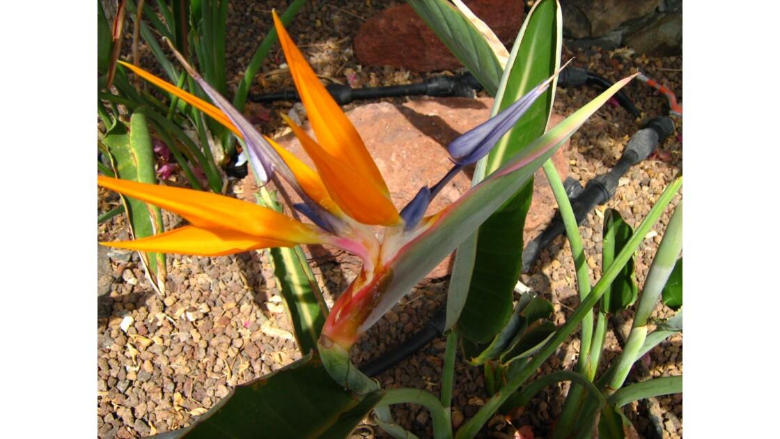 beauté d'une fleur