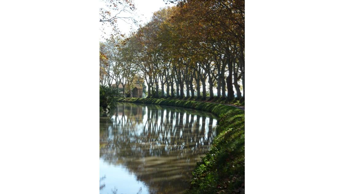 En longeant le Canal du Midi au niveau de Portiragnes - Hérault