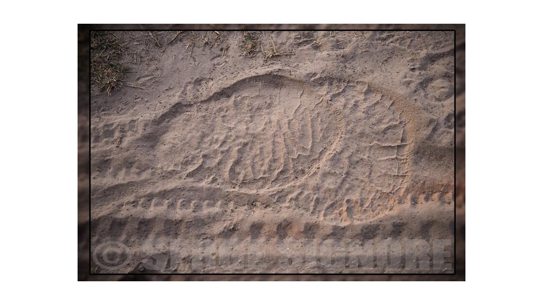 A qui sont ces traces de pates? (v3)