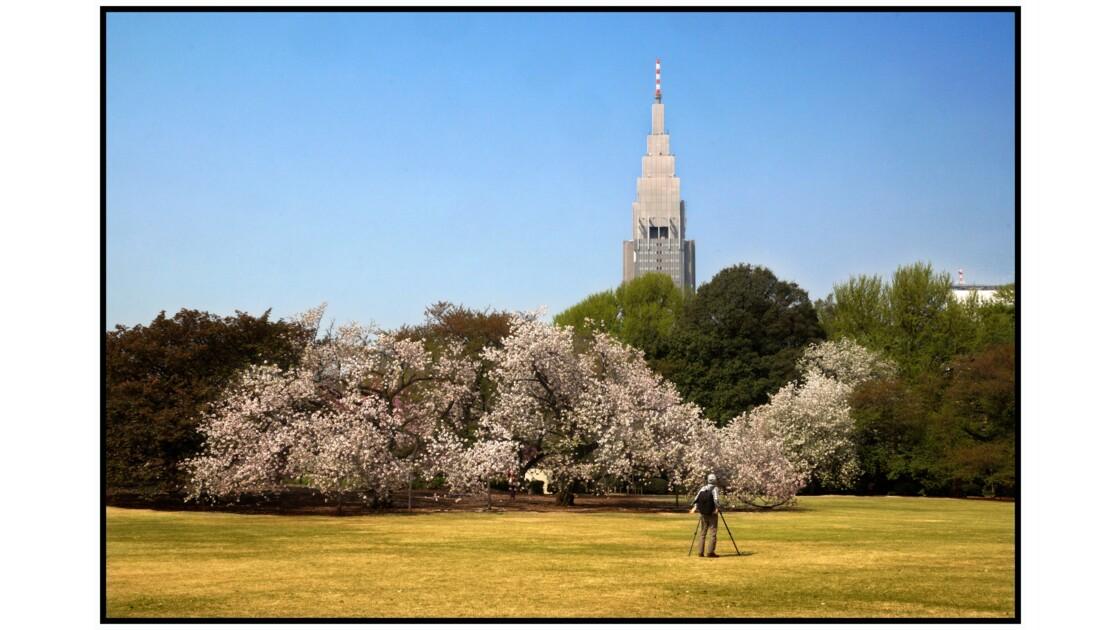 Tokyo - Sakura au Shinjuku Gyoen et tour DoCoMo
