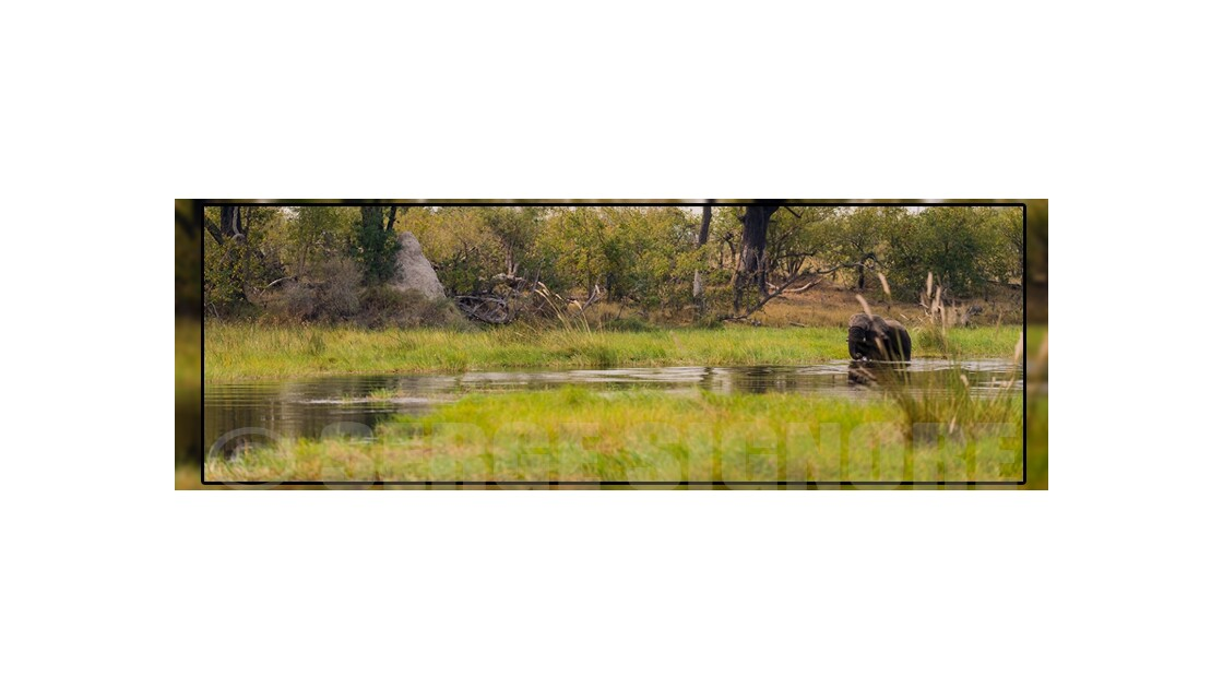 L'Okavango