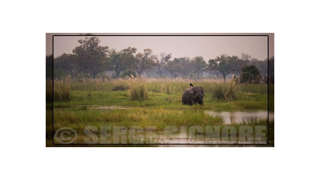 L'Okawango