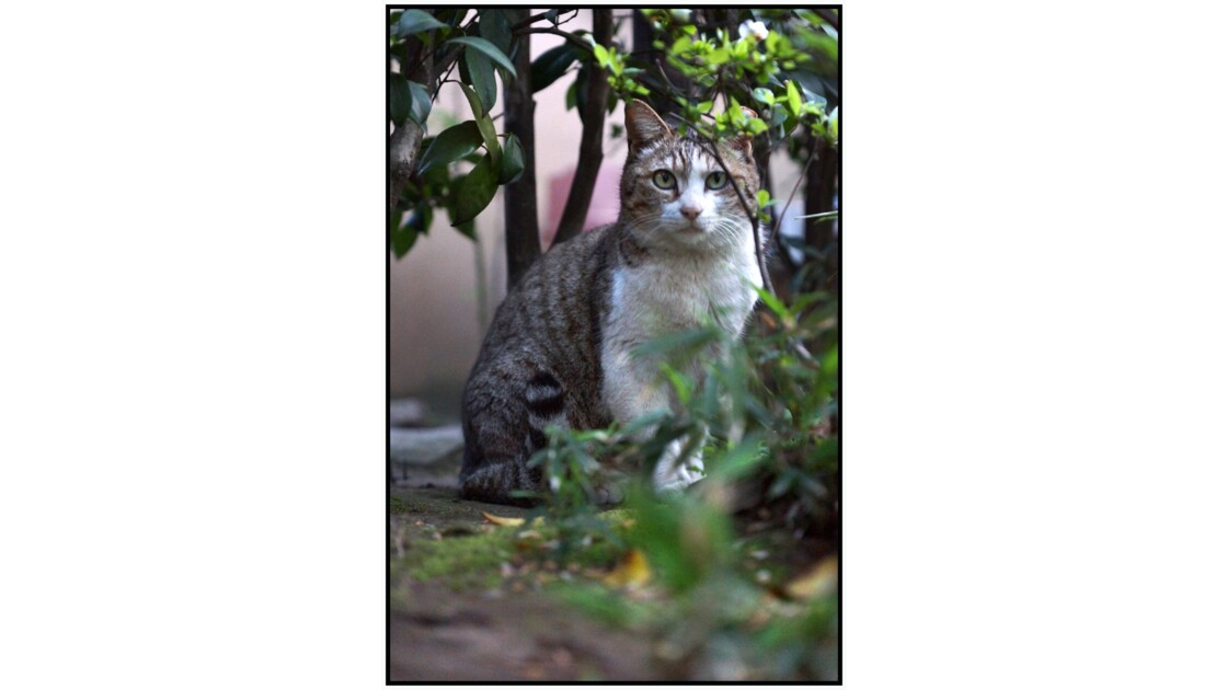 Tokyo - Yanaka - Les chats et le quartier