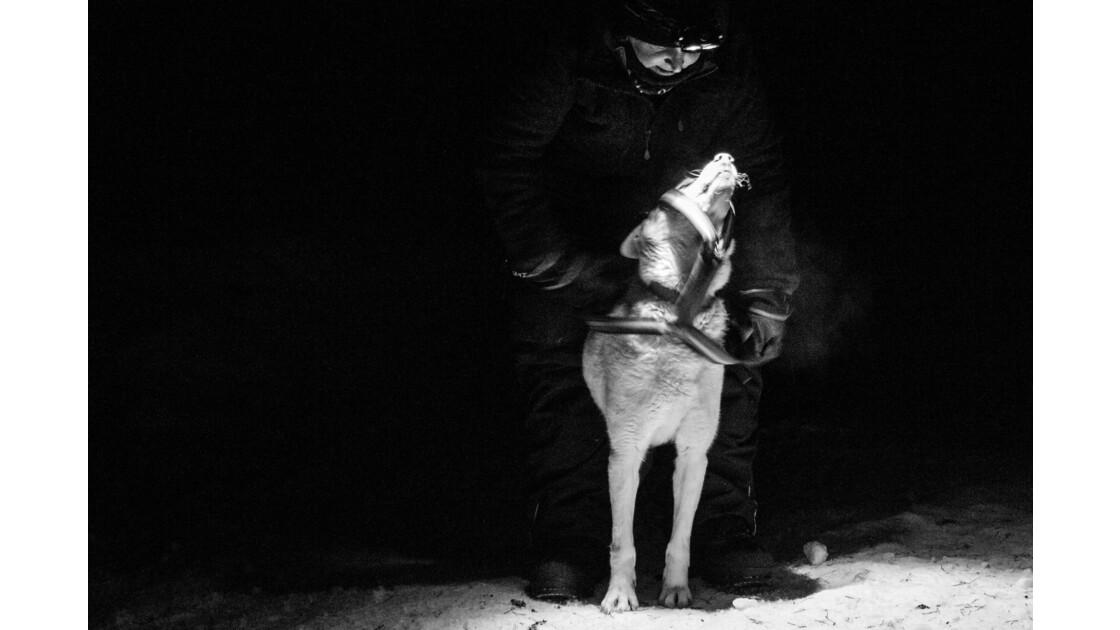 La relation chiens-musher