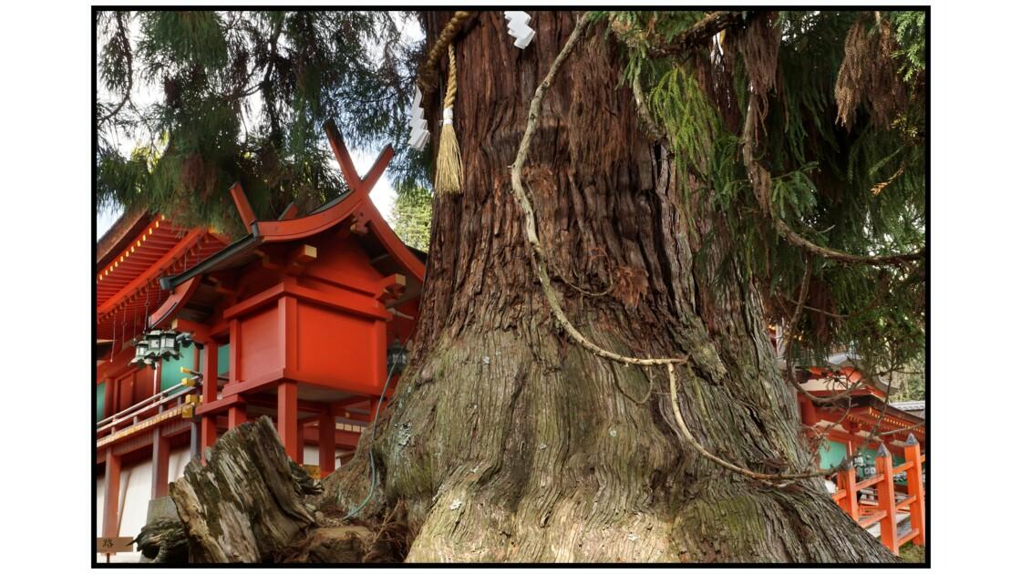 Nara - Shimenawa et gohei au Kasuga-taisha