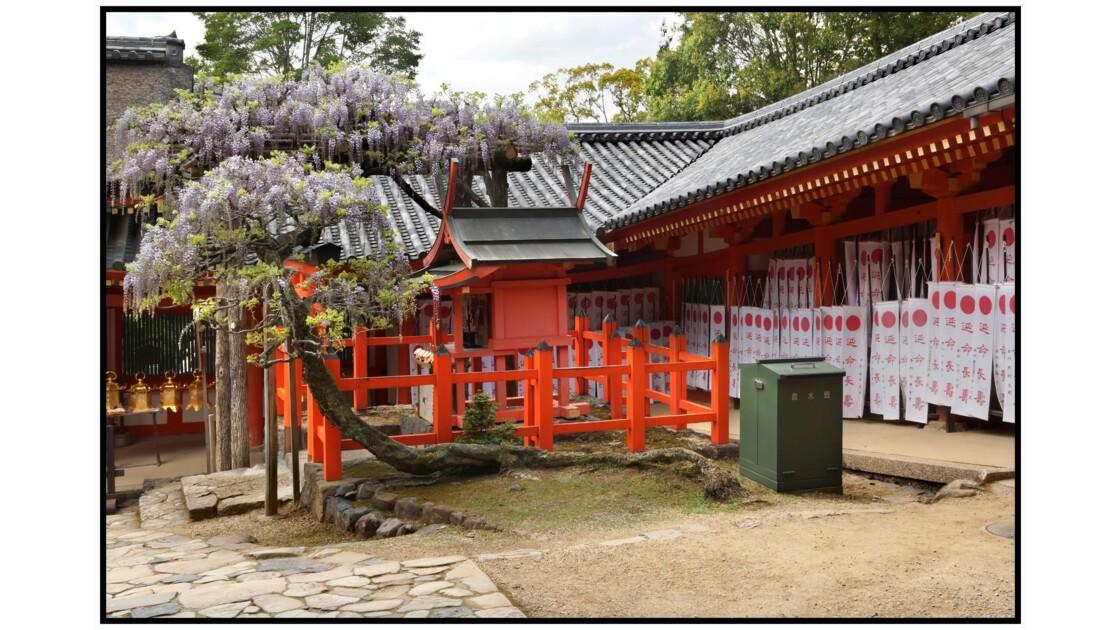 Nara - Sunazuri-no-Fuji  du Kasuga-taisha