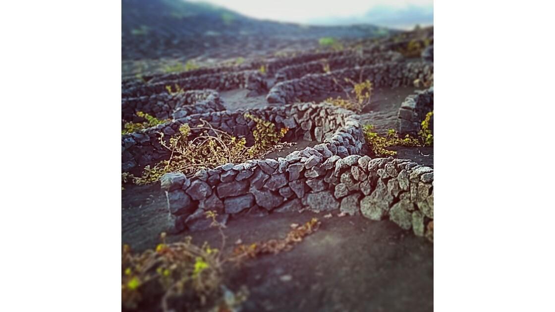 La Geria, vignoble de Lanzarote