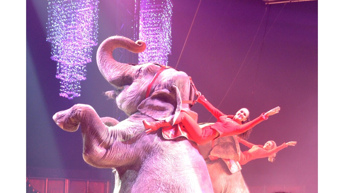 Salut éléphantesque