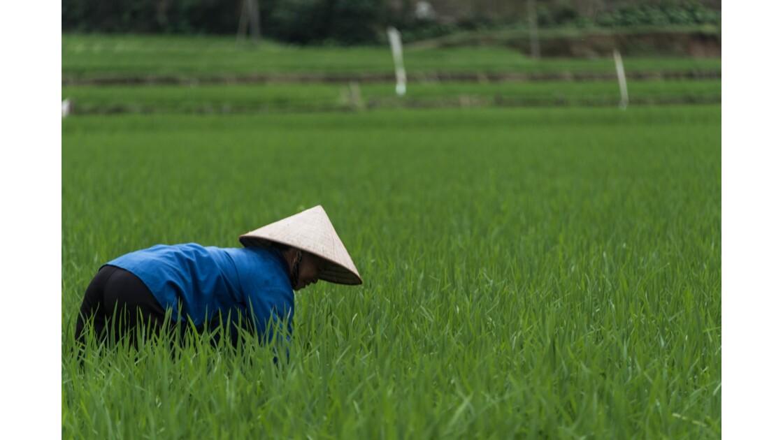 Scène de vie locale au nord du Vietnam