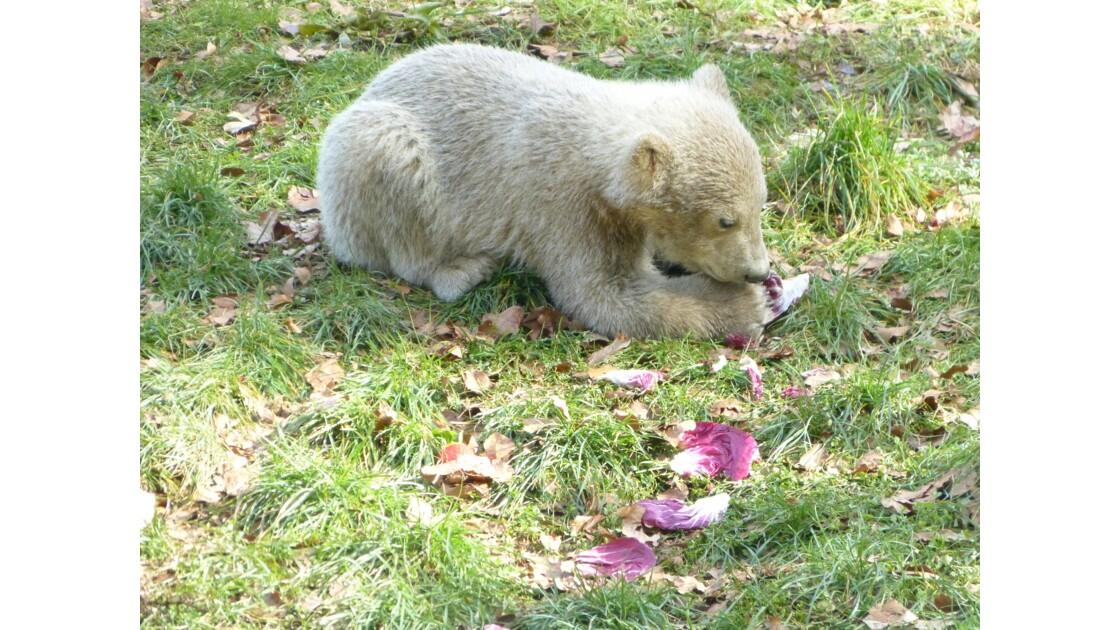 Nanuq au Zoo de Mulhouse