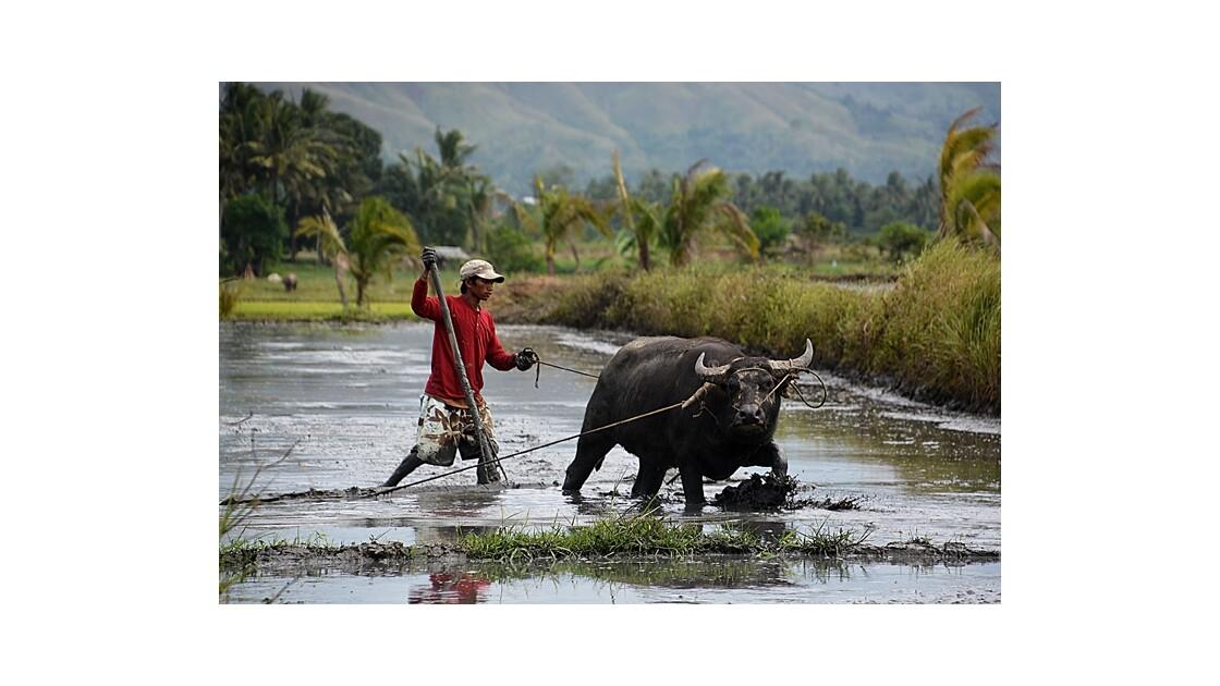 animaux Philippines