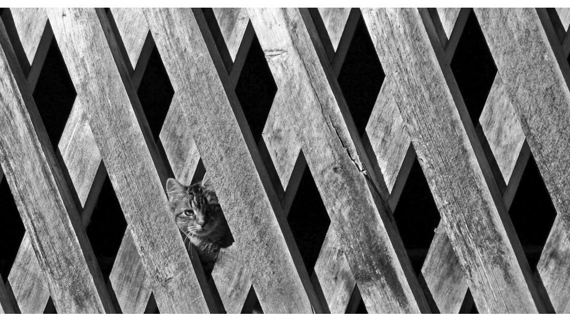 Cache-cache tigré