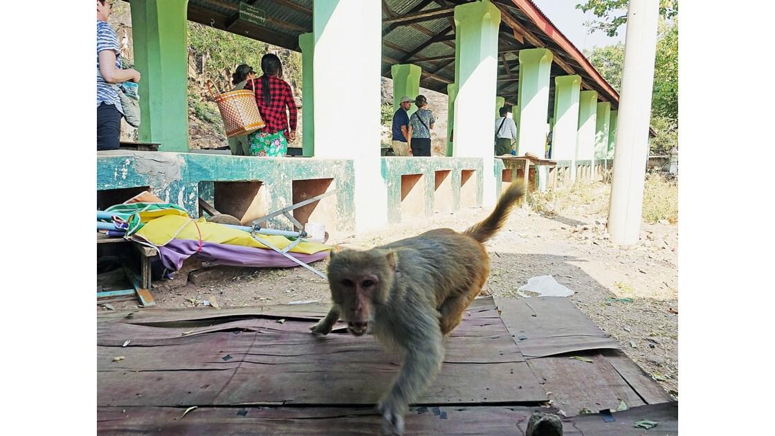 Myanmar Po Win Taung Les gardiens des temples 1