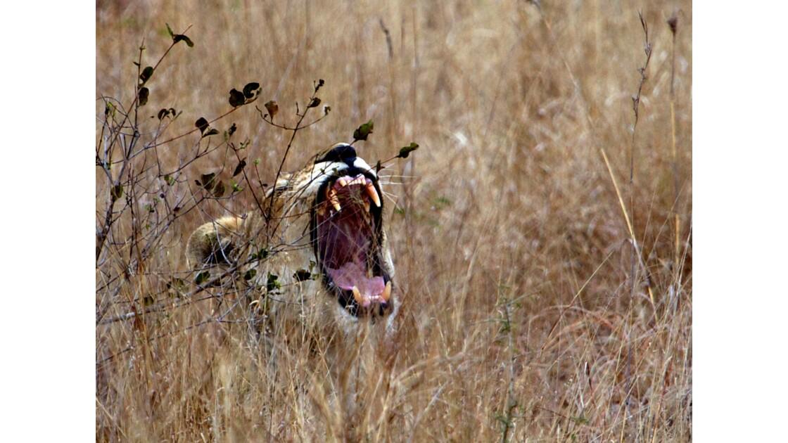 Un petit somme, Kruger