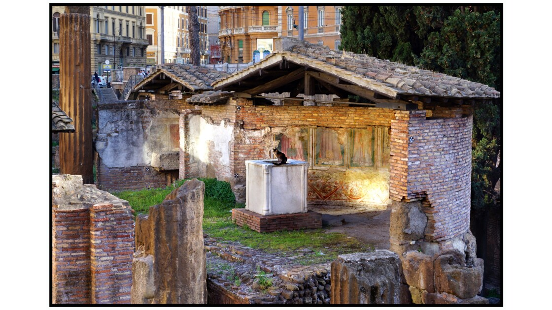 Rome - Chat de Largo di Terra Argentina