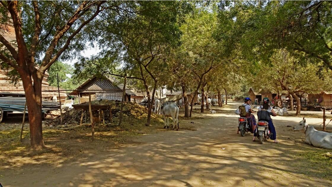 Myanmar Bagan Village de Leya  3