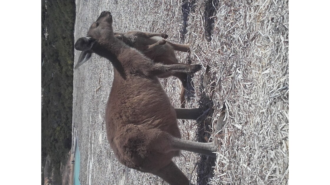 Kangoroo mum & baby