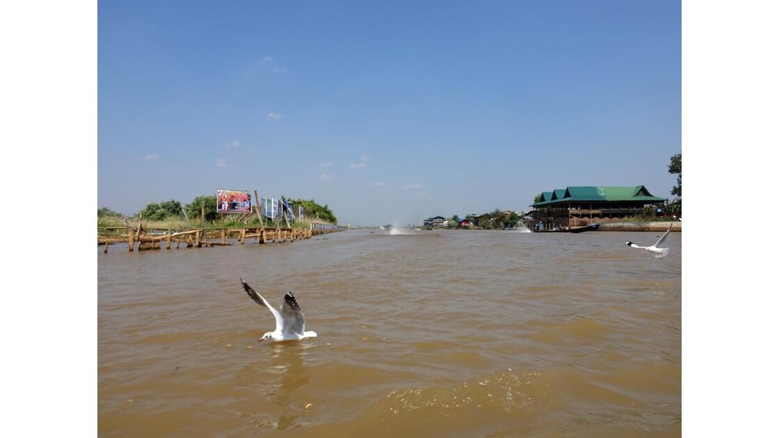 Myanmar Lac Inlé Les mouettes de la Pagode Phaung Daw Oo 2