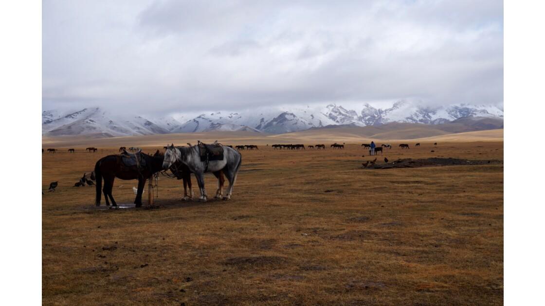 Campement Kirghizistan