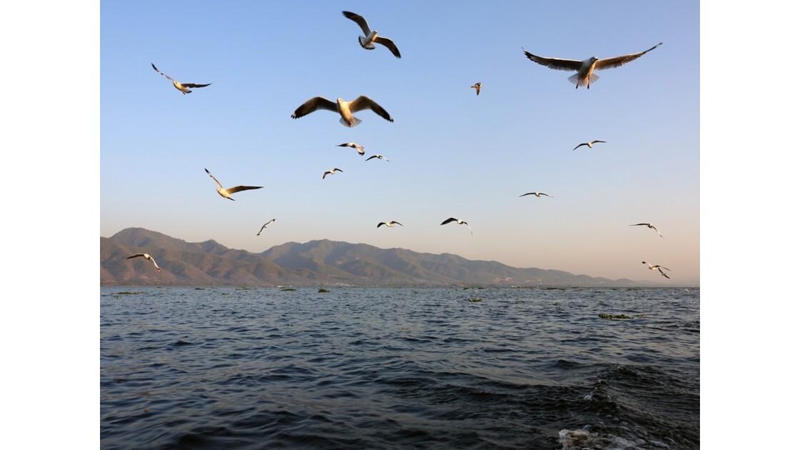 Myanmar Lac Inlé Mouettes au Sunset 11