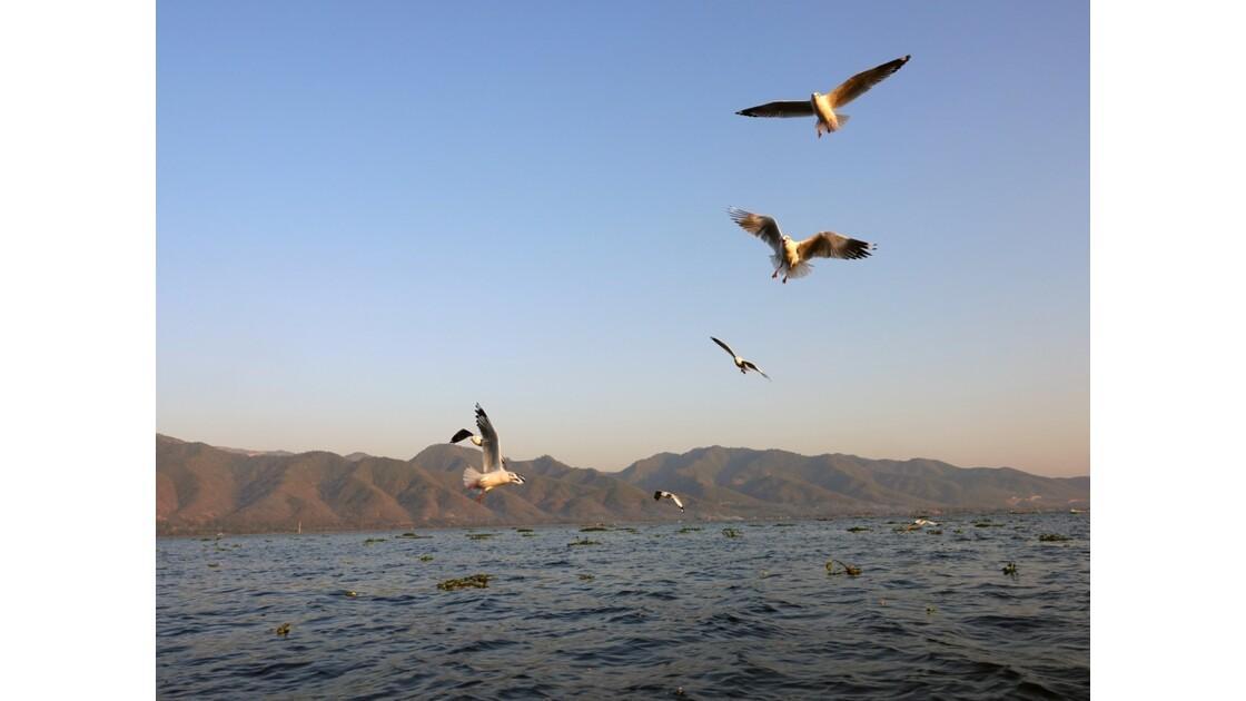 Myanmar Lac Inlé Mouettes au Sunset 10