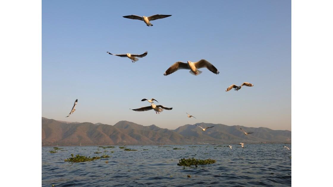 Myanmar Lac Inlé Mouettes au Sunset 9