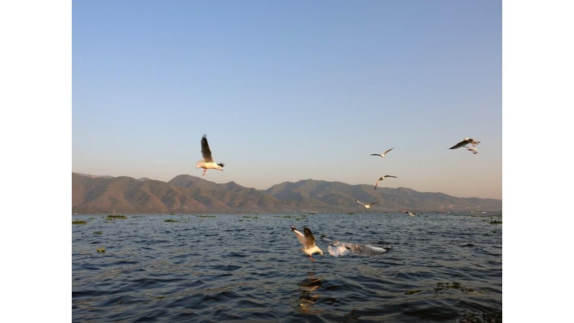 Myanmar Lac Inlé Mouettes au Sunset 8