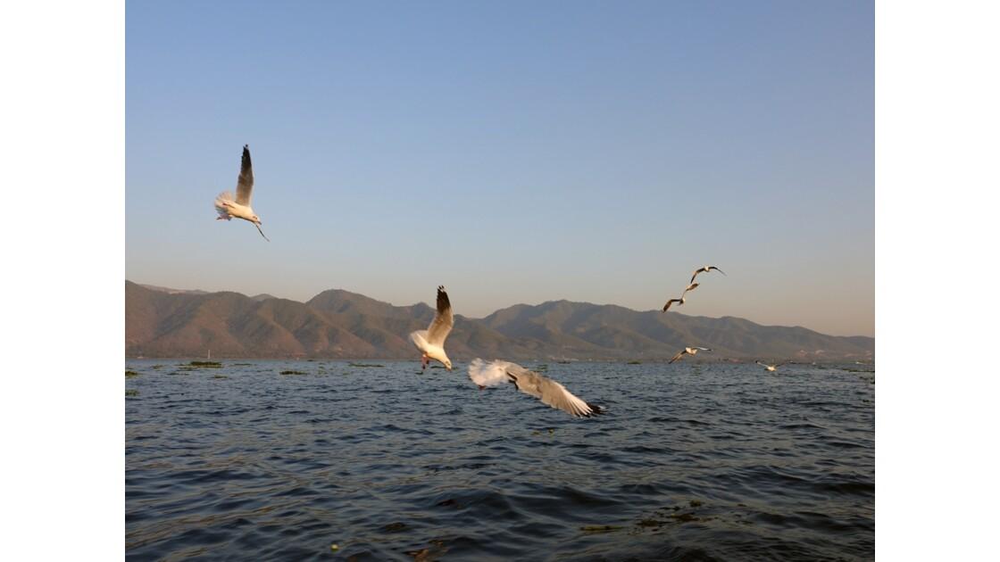 Myanmar Lac Inlé Mouettes au Sunset 7