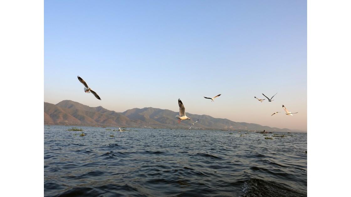 Myanmar Lac Inlé Mouettes au Sunset 5