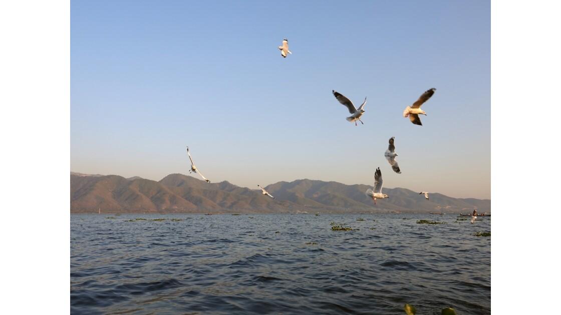 Myanmar Lac Inlé Mouettes au Sunset 3