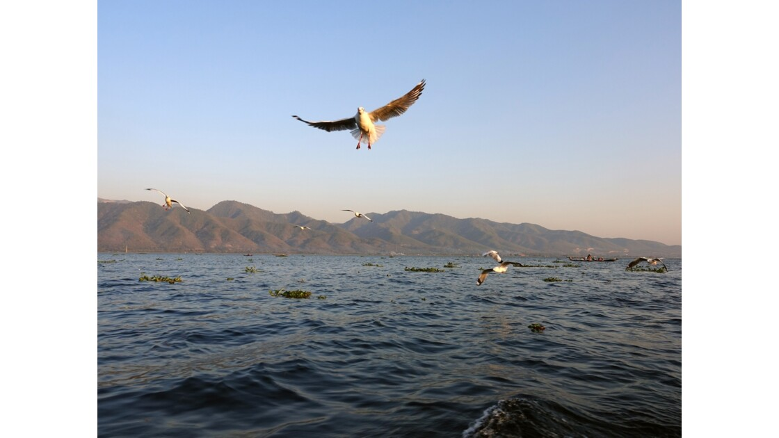 Myanmar Lac Inlé Mouettes au Sunset 1